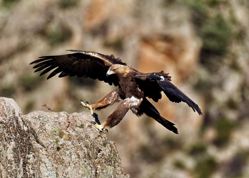 Animali di Sardegna