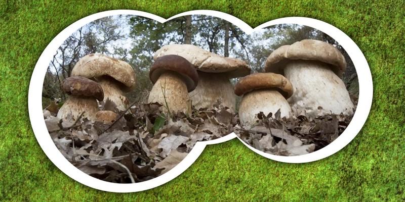 Nel Regno dei Funghi